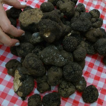 b2b-wholesale-truffles
