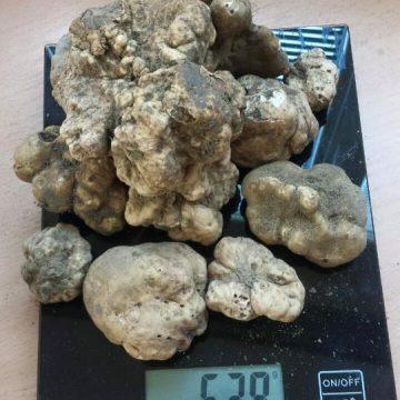 white-truffles-3