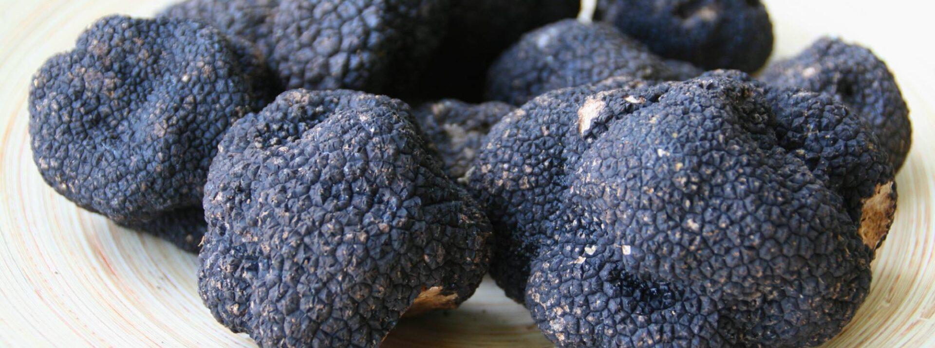 coccia-black-truffle